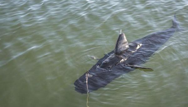 ВМС США используют роботов акул